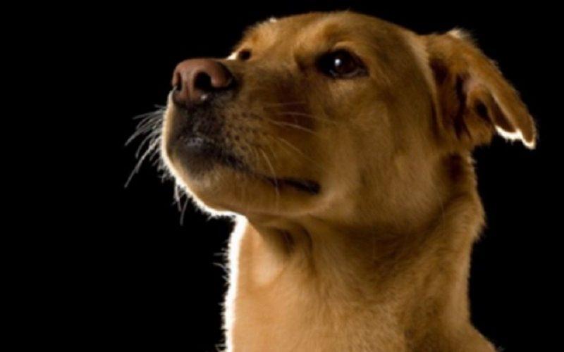 Сделано с любовью: прекрасные фотографии беспородных собак