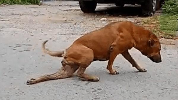 Собака, которая способна обмануть и разжалобить кого-угодно. Чем и пользуется, чтобы выпрашивать еду у прохожих